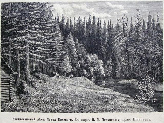 Петровщинская лиственная роща